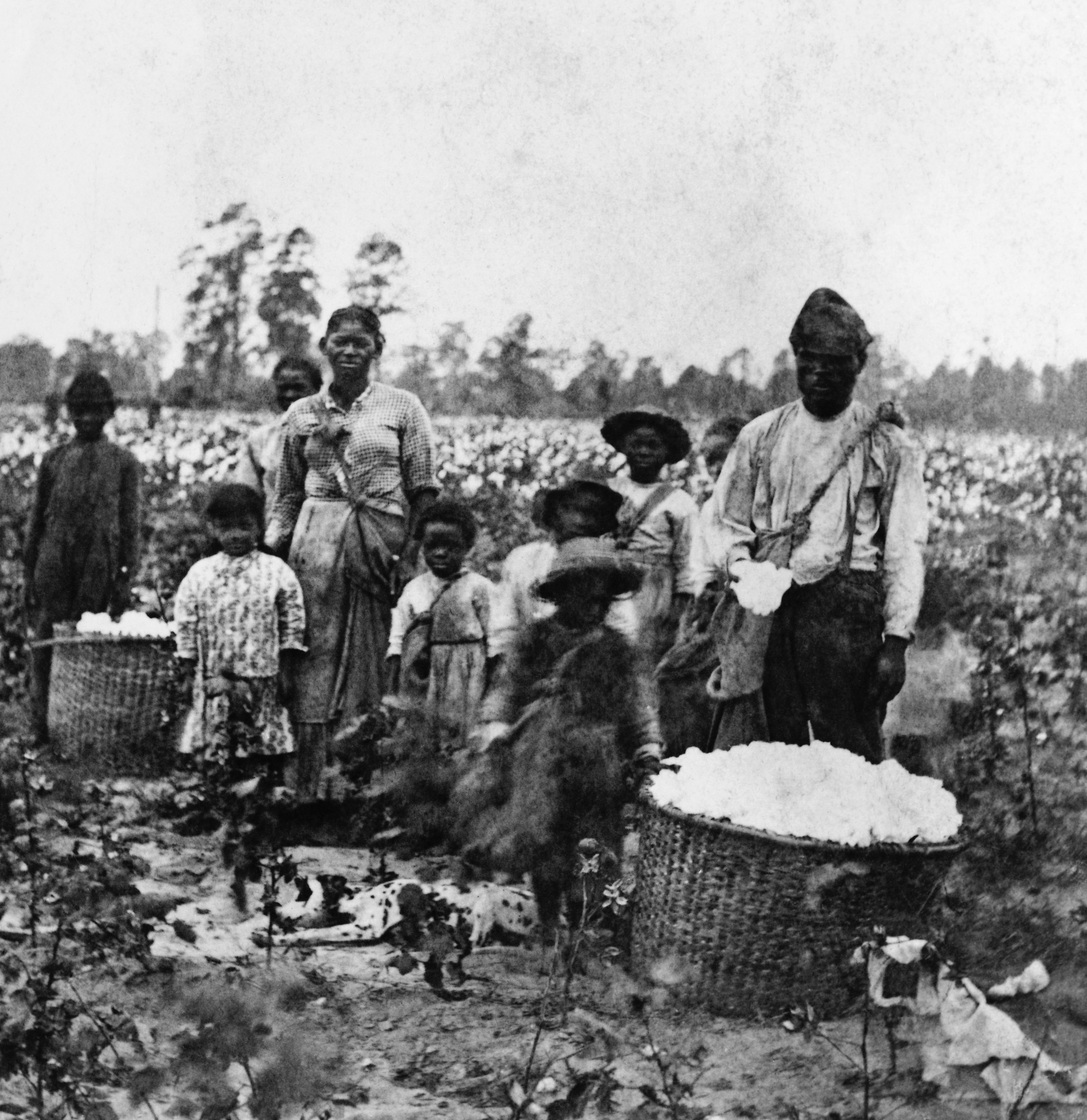 Enslaved cotton pickers, 1860s